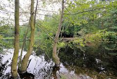 Bäume im Wasser - Raakmoorteich am Rande des Naturschutzgebiets in Hamburg Hummelsbüttel.