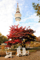 Herbst in Hamburg - Bilder aus der Grünanlage in der Hamburger Innenstadt: Planten un Blomen. Japanischer Ahorn mit roter Herbstfärbung - Fernsehturm.