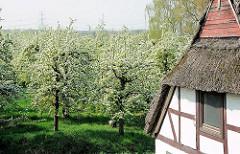 Giebel eines strohgedeckten Fachwerkhauses  - Wiese mit Obstbäumen in Blüte im Hamburger Stadtteil Francop.