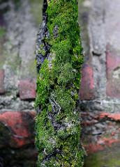 Altes Tau / Leine mit Moos bewachsen - Hafenmauer in Hamburg.