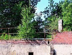 Verrostetes Eisengeländer, junge Birken und Sträucher wachsen aus dem Mauerwerk -  Kaimauer im Hamburger Hafen.