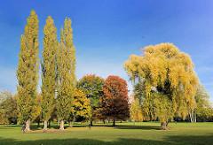 Wiese mit Herbstbäumen im Alstervorland - Alsterwiese in Hamburg Harvestehude; Bilder vom Herbst
