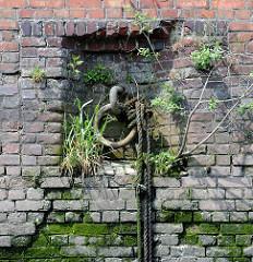 Historische Ziegelmauer / Kaimauer im  Hamburger Hafen; Anlegestelle mit Eisenring und alten Tauen - Wildkraut, Gras wächst in den Mauerfugen.