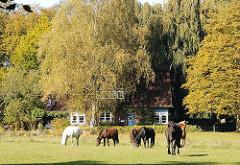 Pferdeweide mit grasenden Pferden in Hamburg Wohldorf Ohlstedt - Einzelhaus zwischen Bäumen.