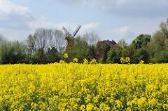 Frühling in Hamburg - Rapsfeld bei Hamburg Reitbrook - Reitbrooker Mühle