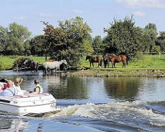 Eine Herde Pferde auf der Weid am Ufer der Doveelbe - ein Motorboot fährt vorbei.