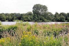 Blühende Pflanzen am Ufer des Rückhaltebecken in das die Tarpenbek in Hamburg Langenhorn fliesst.