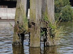 Alte Holzdalben mit Gräsern bewachsen - Moldauhafen, Hafenbecken im Hambuger Stadtteil Kleiner Grasbook.