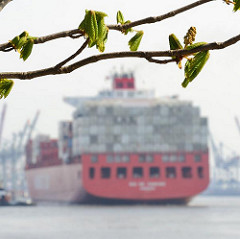 Kastanienbaum im Fruehling Containerschiff Hamburger Hafen.