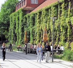 Gelände der Hamburger Universität - Hausfassade mit Efeu bewachsen. Tische in der Sonne.