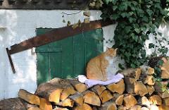 Holzstapel vor dem Haus - eine Katze sitzt auf dem geschichteten Feuerholz. Eine Zweimann Schrotsäge hängt an der Hauswand.