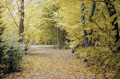 Waldweg mit Herbstlaub im Bramfelder Hohnerkamp, Gartenstadt.