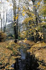 herbstliche Stimmung - der Bach Saselbek fliesst durch den Wald - gelbes  Herbstlaub liegt am Ufer des kleinen Hamburger Flusses.