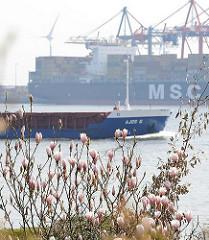Blühende Magnolien an der Elbe - Schiffsverkehr