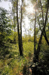 Bilder aus dem Hamburger Naturschutzgebiet Höltingbaum; Bäume im Gegenlicht.