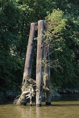 Ufer im Hamburger Hafen - alte verwitterter Holzdalben  sind mit Gräsern und Wildkraut bewachsen, eine dicke Eisenkette hängt ins Wasser.