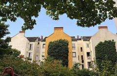 Rückseite von mehrstöckigen Wohnhäusern - mit Efeu bewachsene Hausfassade - Wohngebäude in HH-St. Pauli.