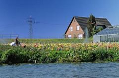 Blumenzucht am Ufer der Dove-Elbe - auf freiem Feld wachsen die Blumen, eine Bewässerungsanlage berieselt die Pflanzen - rechts ein Glasgewächshaus.