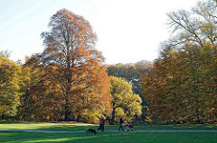 Bäume im Park - Herbst in Hohenbuchen - herbstlicher Mischwald in Hamburg Poppenbüttel. Spazierengehen in der Herbstsonne.
