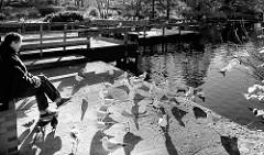 Platz an der Sonne - Wallanlagen, Möwen am Teich.