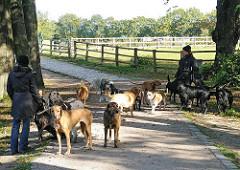 Hundeauslauf beim Kupferteich - ein grosses Rudel Hunde mit Hundeführerin.