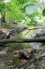 Lauf vom Hamburger Fluss Saselbek im Hamburger Stadtteil Berstedt - ein Baumstamm liegt über dem Bachlauf.
