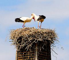 Storchenpaar im Nest auf der Spitze eines alten Schornsteins - Fotos aus Hamburg Neuengamme.