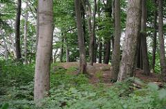 Buchenwald  in Hamburg Langenbek  -  Hügelgrab aus der Bronzezeit.
