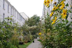 Terrassenhaeuser am Falkenried - Gärten und Blumen vor den Häusern. Leben in Hamburg Hoheluft Ost.