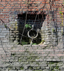 Alte Kaimauer im Hamburger Hafen; eingelassener Eisenring zum Vertäuen von Schiffen, bemooste Taureste. Im Ziegelmauerwerk wächst aus den Mauerfugen Wildkraut / Gräser.
