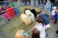 In einem kleinen Pferch ausgestellte Schafe auf dem Landmarkt in Hamburg Bergedorf - Kinder füttern die Tiere mit Heu.
