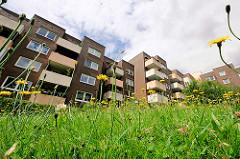 Grüne Wiese mit Blumen - Etagenhäuser und Balkons.