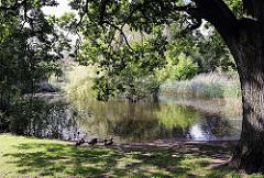Hamburg Marienthal - Bei der Marienanlage - Grünanlage mit Teich - Enten sitzen am Ufer unter einer dicken Eiche.