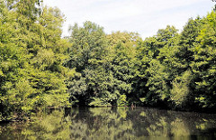 Wald im Stadtpark Harburg - Bäume am Wasser - Fotos aus dem Stadtteil Wilstorf.