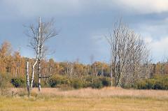 Kahle Birken und herbstliche Bäume am Wiesenrand - Duvenstedter Brook