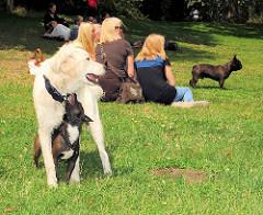 Sommer in der Hansestadt Hamburg - spielende Hunde auf der Wiese am See im Stadtpark Hamburg Winterhude.