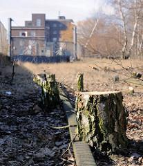 Stillgelegte Bahnlinie / Hafenbahn auf der Peute im Hamburger Stadtteil Veddel - Bäume wachsen zwischen den Bahnschienen - Bäumstümpfe von Birken.