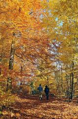 Wanderweg durch den herbstlichen Wald an der Alster - hohe Bäume säumen den Weg, der mit Herbstlaub bedeckt ist.