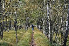 Spaziergänger auf einem Trampelpfad zwischen Birken im Duvenstedter Brook.