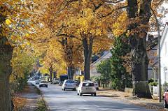 Herbstbäume in der Poppenbüttler Hauptstrasse - leuchtendes Herbstlaub in der Sonne.