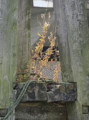 Holzdalbe mit herbstlichen Wildkraut und alter Leine -  Überbleibsel vom alten Hamburger Hafen.