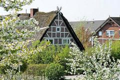 Reetgedecktes Fachwerkhaus - blühende Bäume - Frühling im Alten Land - Bilder aus Hamburg Francop.