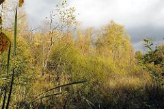 undurchdringliche Naturlandschaft - Naturschutzgebiet Duvenstedter Brook.