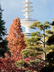 Japanischer Garten in Planten un Blomen - Ahorn mit Herbstfärbung; Hamburger Fernsehturm in der Sonne.