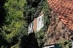 Mit Efeu bewachsene Hausfassade an einem Backstein-Lotsenhaus in Hamburg Oevelgoenne - Stadtteil Othmarschen - Bezirk Hamburg Altona.