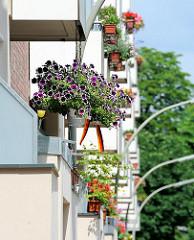 Blumenampeln und Balkonkästen mit Geranien und anderen Blumen in der Jarrestadt, Hamburg Winterhude.