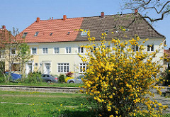Gelb blühender Strauch - Grasfläche in der Gartenstadt Steenkampsiedlung - Mehrfamiliengebäude.