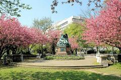 Kirschblüte der Japanischen Kirsche an der Fontenay beim Kriegerdenkmal.