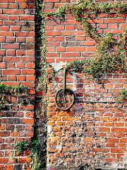 Bewachsene Ziegelmauer an einem Kanal in Hamburg Hammerbrook.