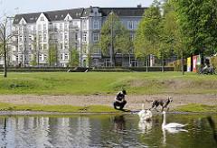 Hundeauslauffläche am Alsterlauf - Hamburg Eppendorf - Hund mit Schwänen.